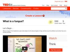 What is a Fungus? Video