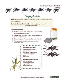 Singing Crickets Lesson Plan