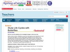 Study Life Cycles with Butterflies Lesson Plan