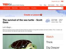 The Survival of the Sea Turtle Video