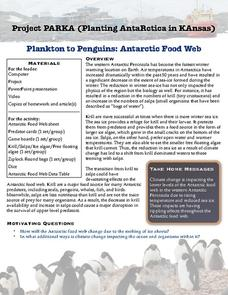 Plankton to Penguins: Antarctic Food Web Lesson Plan