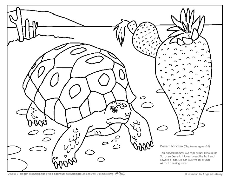 Tortoise Lesson Plans & Worksheets Reviewed by Teachers