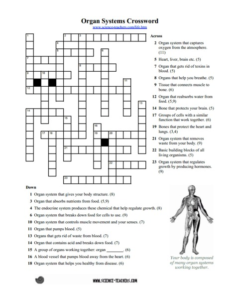 Organ Systems Crossword Puzzle Worksheet For 5th 8th