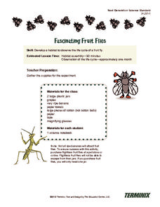 Fascinating Fruit Flies Activities & Project