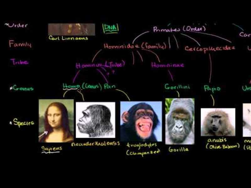 Taxonomy and the Tree of Life Video
