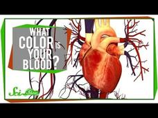 What Color is Your Blood? Video