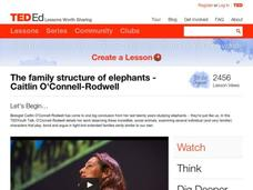 The Family Structure of Elephants Video