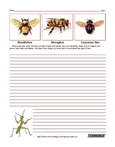 Bee Writing Prompt Writing Prompt