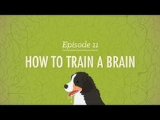 How to Train a Brain Video
