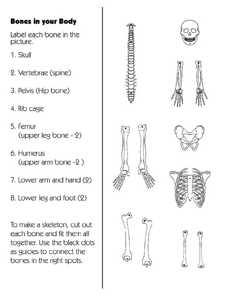 Bones in Your Body Printables & Template