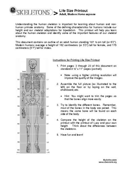 photo regarding Printable Human Skeleton to Assemble named Lifetime-Dimension Printout: Grownup, Impressive Homo Sapiens Printables