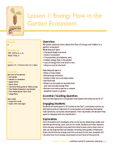 Energy Flow in the Garden Lesson Plan