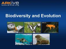 Biodiversity and Evolution Presentation