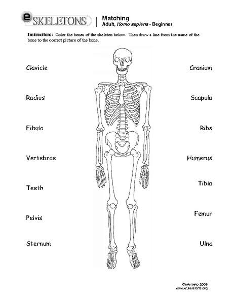 Matching: Adult, Homo Sapiens Worksheet for 1st - 7th Grade ...