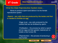 Male and Female Reproductive Systems Presentation