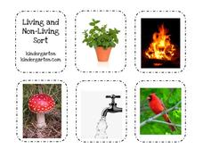 Living and Non-Living Sort Activities & Project