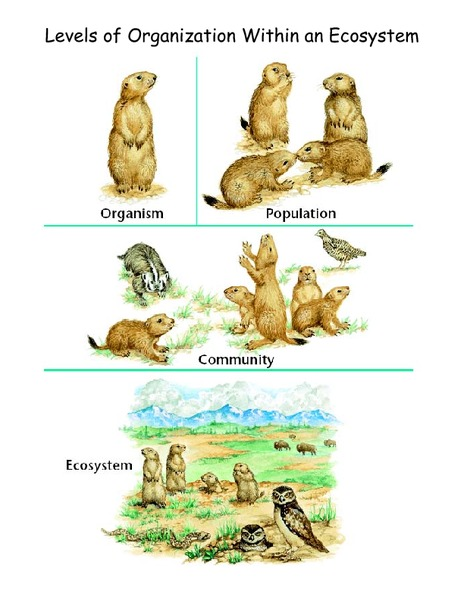 Levels of Organization within an Ecosystem Worksheet for 5th - 10th Grade | Lesson Planet