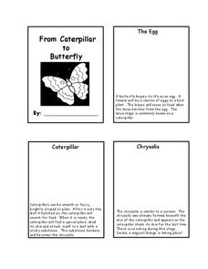 From Caterpillar to Butterfly Worksheet