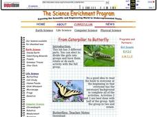 From Caterpillar to Butterfly Lesson Plan