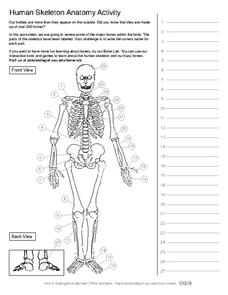 Human Skeleton Anatomy Activity Worksheet for 5th - 10th ...