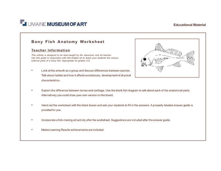 Fish Characteristics Lesson Plans Worksheets Reviewed By Teachers