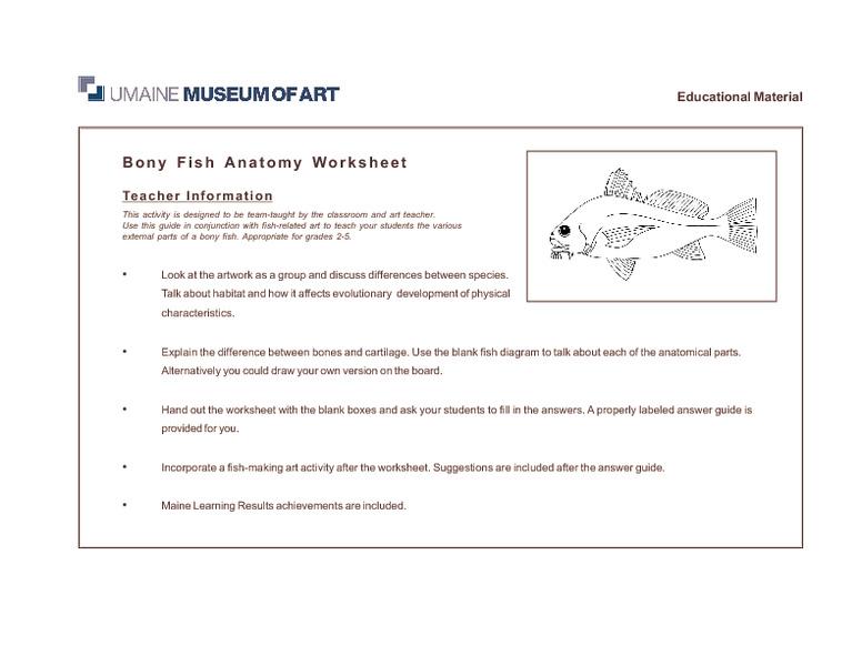 Bony Fish Anatomy Worksheet 2nd 5th Grade Worksheet – Fish Worksheet