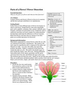 Parts of a Flower! Flower Dissection Lesson Plan ...