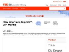 How Smart Are Dolphins? Video