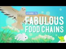 Fabulous Food Chains Video