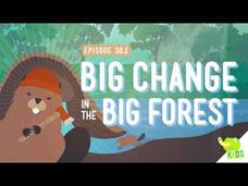Big Changes in the Big Forest Video