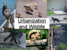 Urbanization and Wildlife Presentation