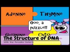 DNA Structure and Function Video