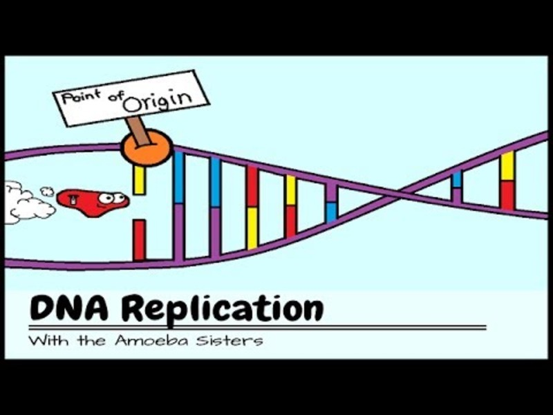 DNA Replication: The Cell's Extreme Team Sport Video