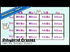 Punnett Squares and a Dihybrid Cross Video