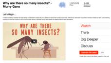 Why Are There so Many Insects? Video