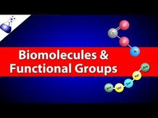 Biomolecules and Functional Groups Video