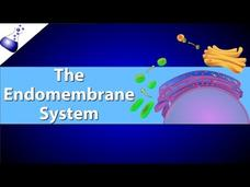 The Endomembrane System Video