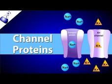 Channel Proteins Video