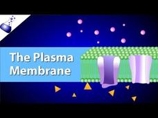 The Plasma Membrane and the Fluid Mosaic Model Video