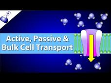 Active, Passive, and Bulk Cell Transport Video