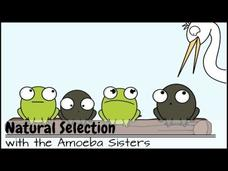 Natural Selection and the Bacterial Resistance Video