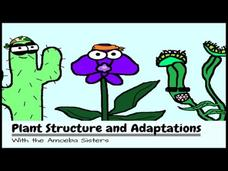 Plant Structure and Adaptations Video