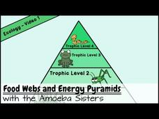 Food Webs and Energy Pyramids: Bedrocks of Biodiversity Video