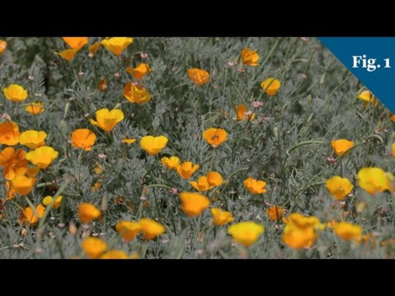 This Is How Plants Predict Climate Change Video