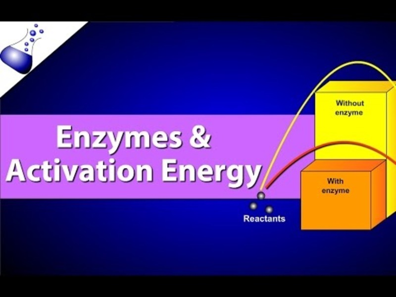 Enzymes and Activation Energy Video