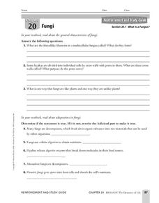 Fungi Worksheet