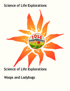 Wasps and Ladybugs Lesson Plan