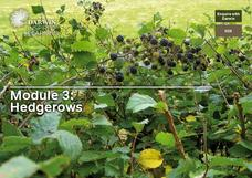 Hedgerows Lesson Plan