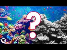 Can Coral Reefs Survive Climate Change? Video