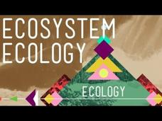Ecosystem Ecology: Links in the Chain Video